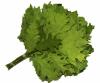 Веник из красного (канадского) дуба